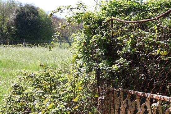 Forme di degradazione del paesaggio agrario. F. Palpati, Fondo agricolo a Macchie di Amelia.